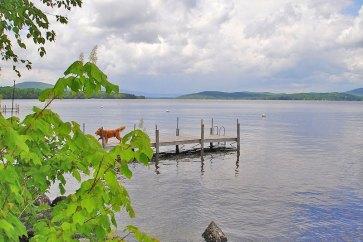 dog-on-dock